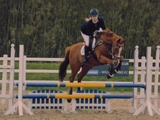16hh 14 year old all rounder