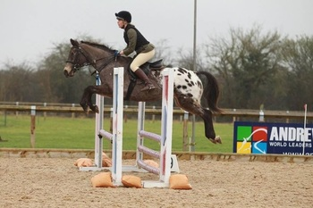 Eye catching jumping pony