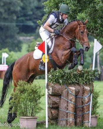 Perfect YR or professional ride. 9yr old 16.2hh Event Horse