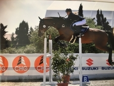 Talented showjumper available for schooling and showjumping