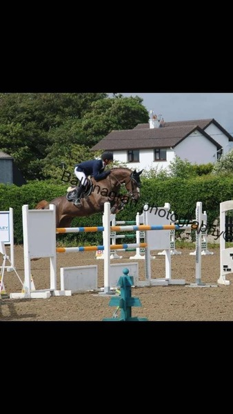 TOP CLASS! Superb 8yr old Professional/Young rider showjumper