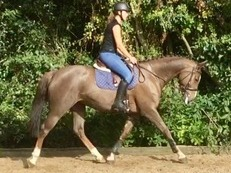 TOP CLASS ALLROUNDER/FUTURE EVENT HORSE