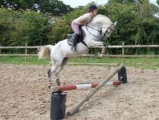 15. 1hh Anglo Arab Mare All Rounder