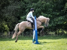 Loves to jump / 14.2hh 10yo thoroughbred X quarter horse