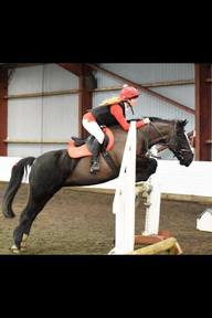 Stunning 14.1hh all rounder