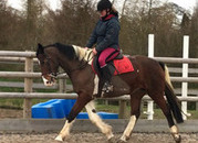 Stunning 15.1HH Skewbald mare