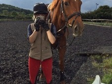 10yr old 16'3 Irish Sport Horse Allrounder.