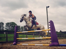 Experienced Rider Wanted for 15.2hh 10y.o Show-Jumper Mare FULL LOAN
