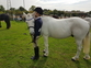 Mothers dream 1st or 2nd pony  for sale