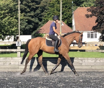 Lovely uphill gelding .