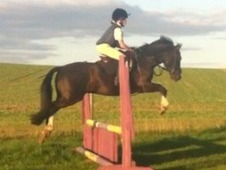 14hh Black Gelding (Hunter, PC, all rounder)