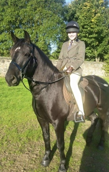 14.2hh WELSH SECTION D GELDING FOR PART LOAN NETHERLY