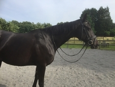 16.2 TB mare for full loan