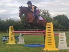 Beautiful 13hh Bay Riding Pony