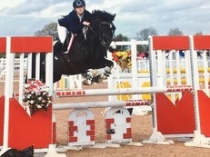 Superstar 148 Showjumper