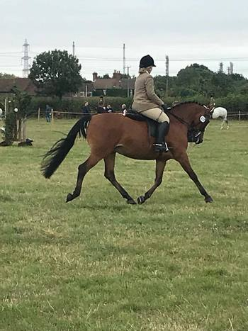 Super 145cm Junior Competetion Pony