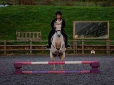 Stunning pony club pony for sale! ! !