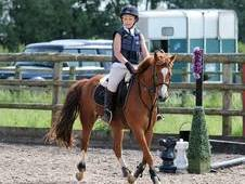12. 2hh 8 year old welsh PC/lead/first/second pony