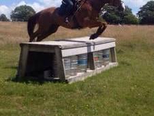 Allrounder/ Eventer / Showjumper