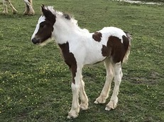 stunning small filly