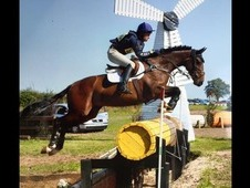 Hermes Royale / 16. 1HH / 8 years old / Quality Eventer