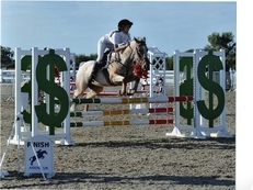 Proven Showjumping & Eventing Pony