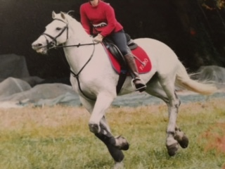 Fun 14.2 hh 14 year old NF Gelding