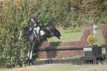 IDEAL SHOWJUMPER/ ALL ROUNDER