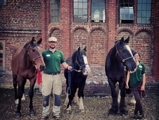 English Heritage looking for Head Groom