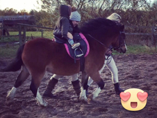 Gorgeous section A gelding