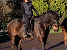 Beautiful, dark bay, 17hh Thoroughbred gelding up for share!
