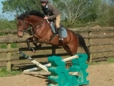 Eye catching 6yr old gelding