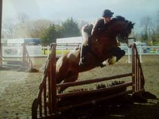 14hh top class whp / potential event pony / allrounder
