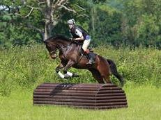 Eventer / Riding Club or Pony Club All Rounder / Team Horse