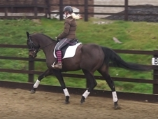 Exceptional dressage horse, recently passed 5 stage vetting.