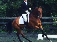Stunning all rounder that excels in dressage
