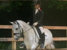 Talented dressage and all round Pony 13. 3