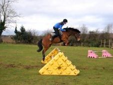 14hh New Forest Gelding for Full Loan