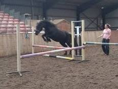 Top Class Performance Welsh Section D Gelding