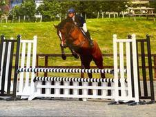 Lovely Warmblood Mare for Sale