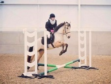 Gorgeous 14. 1hh Andalusian Buckskin Mare