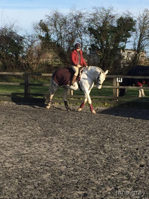 Sweet 16.2 ish mare looking for a sharer near London