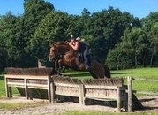 Amber - 16hh 5yo British bred chestnut mare out of a Chacco Blue stallion.