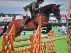 Teenagers/ Adults Amature Competition 16hh