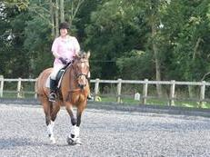 5* HOME AVAILABLE FOR LIFE FOR A SOUND, NON SPOOKY, SANE DRESSAGE SCHOOLMASTER.