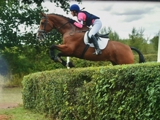 9 yr old Novice Eventer