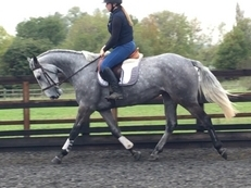 4 year old mare for sale