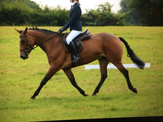 POTENTIAL TOP LEVEL EVENTER/SHOW JUMPER