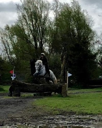 Super 16.3hh 6yr Old Irish Sport Horse Ideal Young Event Horse