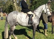 Potential Competition Horse